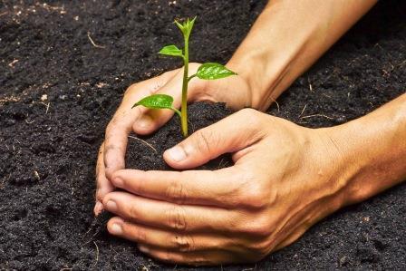 how_to_produce_organic_fertilizer
